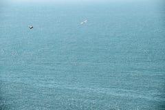 Mouettes volant au ciel images libres de droits
