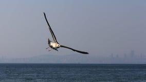 Mouettes volant au-dessus de la mer Photographie stock libre de droits