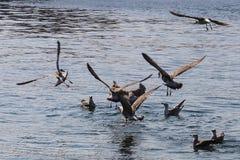 Mouettes volant au-dessus de la mer Photo stock
