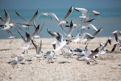 Mouettes volant au-dessus de la plage Photographie stock