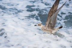 Mouettes volant au-dessus des vagues de la Mer Noire à Sotchi, Russie Image stock