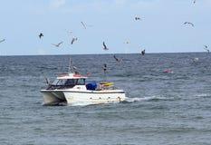 Mouettes volant autour d'un bateau de pêche. Images libres de droits