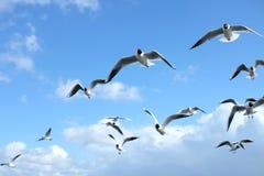 Mouettes volant dans le ciel bleu Photo stock