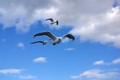 Mouettes volant dans les nuages Images libres de droits