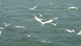 Mouettes volant en mer ouverte clips vidéos