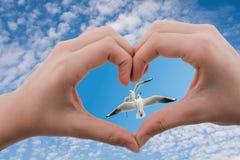 Mouettes vues derrière une main en forme de coeur Image stock