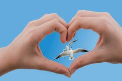 Mouettes vues derrière une main en forme de coeur Photos libres de droits