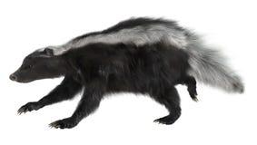 mouffette illustration de vecteur