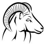 Moufflon head Stock Image