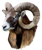 Mouflon Royalty-vrije Stock Afbeeldingen