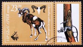 Mouflon o espolón, Plovdiv, EXPO 81, circa 1981 Fotos de archivo libres de regalías