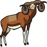 Mouflon Ram. Illustration of a proud mouflon ram Stock Images