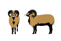 Mouflon Sheep Vector Illustration Stock Photography