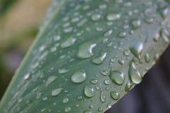 Mouillez avec l'humidité Photo libre de droits