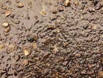 Mouillez la cendre brûlée de l'herbe a solidifié par la pluie dans la boue foncée Arrosez la cendre accrochée dans la couverture Photo libre de droits