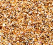 Mouillez le sable multicolore sur la plage dans le jour d'été ensoleillé Image stock