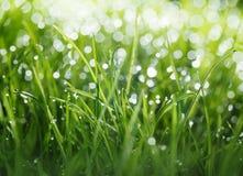 Mouillez les baisses, le soleil et le bokeh sur la pelouse photographie stock