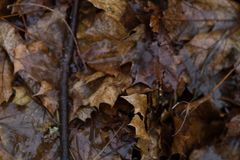 Mouillez les feuilles sur une terre sale Photographie stock