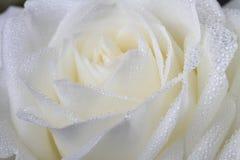 Mouillez rose photos libres de droits