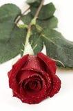 Mouillez rose Photos stock