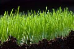 Mouillez sur une herbe Photographie stock libre de droits
