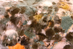 Mould 2. Close-up of a mouldy piece of bread revealing interesting colors and textures royalty free stock images