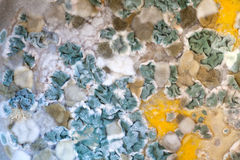 Mould Stock Image