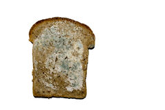 Mould on the bread stock photo