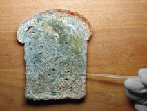 Mould on the bread Royalty Free Stock Photo