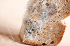 Mould on bread Royalty Free Stock Photos
