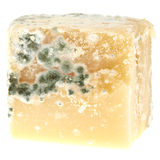 Mould on Cheese Royalty Free Stock Images