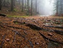 Mould in the fog Black Forest royalty free stock images