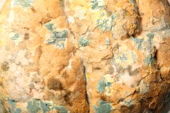 Mould growing on old bread Stock Photo