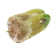 Mould on pepper Stock Photography