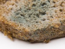 Mould on rye bread Royalty Free Stock Photo