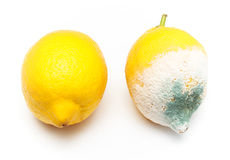 Moulded and fresh lemon Royalty Free Stock Photo
