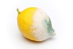 Moulded lemon. Isolated on white Stock Image