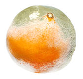 Moulded orange Royalty Free Stock Photography