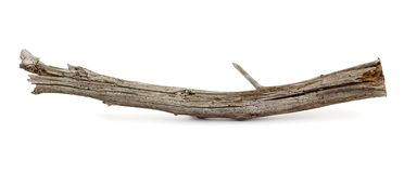 ветвь mouldering Стоковое фото RF