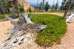Mouldering dry tree against rocky mountains. Stock Image