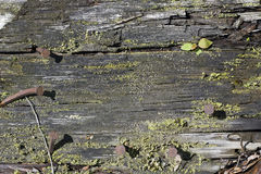 Mouldering wooden board Stock Photography