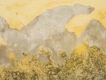 mouldy старая поцарапанная стена Стоковые Изображения RF