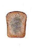 Mouldy хлеб Стоковое фото RF