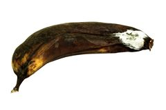 Mouldy Banana Royalty Free Stock Images