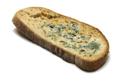 Mouldy bread. Slice of bread with mould Royalty Free Stock Photos