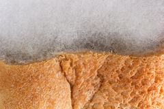 Mouldy bread. Of closeup macro shot Royalty Free Stock Images