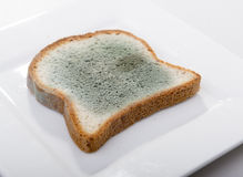 Mouldy Bread Royalty Free Stock Image