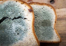 Mouldy Bread Royalty Free Stock Photography