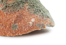 Mouldy bread Royalty Free Stock Images