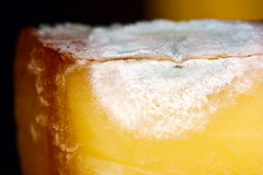 Mouldy cheese. An old moldy piece of cheese Royalty Free Stock Photos